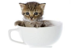 Cat Poo Coffee